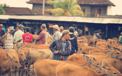 The market days of Bali