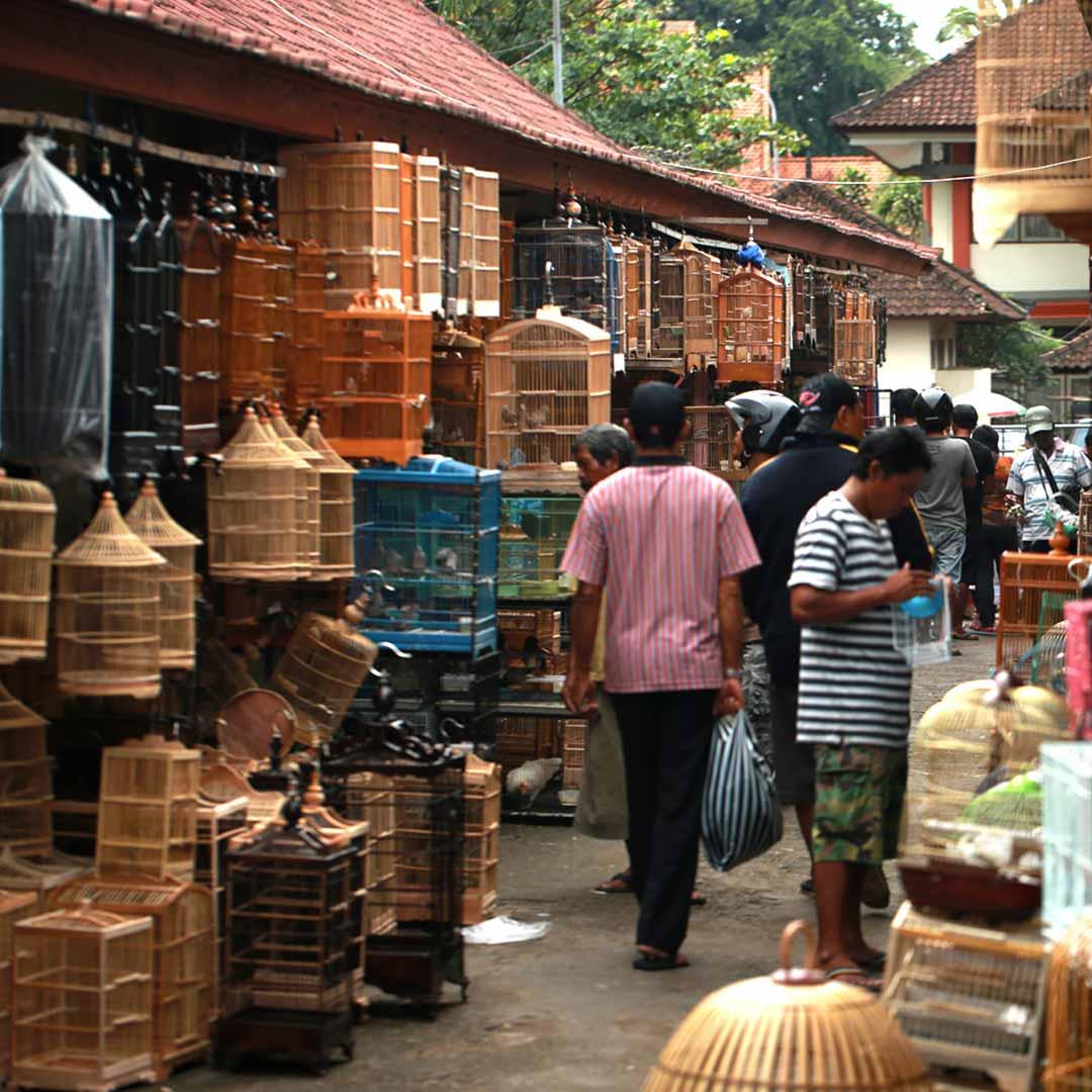 Will Meyrick Markets of Bali